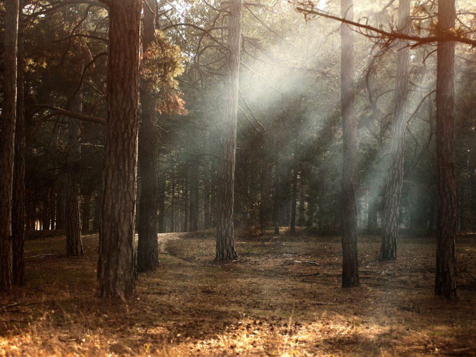 Reforestacion, un negocio